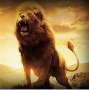 Roaring Male Lion Wall...