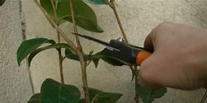 Comment Tailler Un Pommier : taille de formation des arbustes quand et comment ~ Dode.kayakingforconservation.com Idées de Décoration