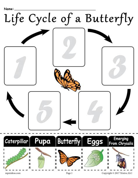 butterfly life cycle for preschool quot cycle of a butterfly quot free printable worksheet 818