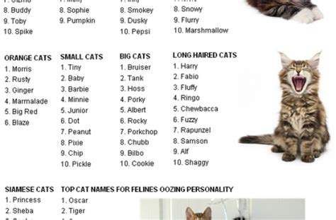 boy names for cats tag for girl kitten names kitten names top girl cat name best for girls related keywords