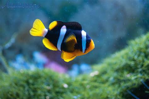 joes aquaworld  exotic fishes mumbai india
