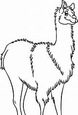 Llama Coloring Pages Drawing Outline Print Clip Clipart Alpaca Cliparts Clipartbest Getdrawings Mama Animal Library sketch template