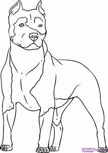 How To Draw a Pitbull, Step by Step, Pets, Animals, FREE ...