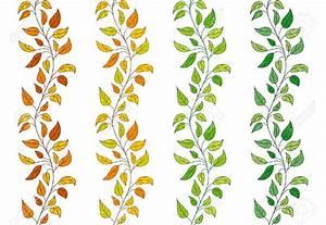 Ivy Leaf Border Clip Art (73+)