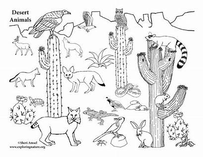 Desert Animals Coloring American Sponsors Wonderful Support
