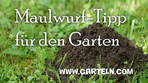 Maulwurfbekämpfung Im Garten by Maulwurf Im Garten