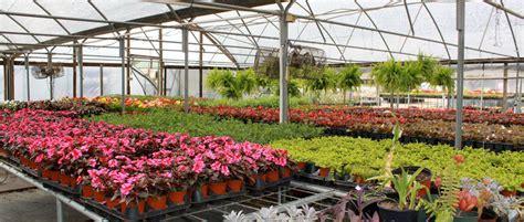 longview new orleans home new orleans gardens nursery longview texas