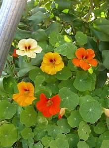 Plantes Grimpantes Mur : glycine cl matite lierre grimpant planter des plantes ~ Melissatoandfro.com Idées de Décoration