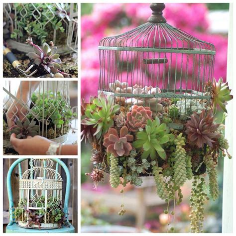 creative ideas diy bird cage succulent planter
