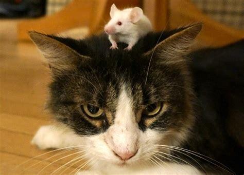 mice  lose innate fear  cats bbc news