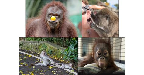 Monkey Funny Pictures