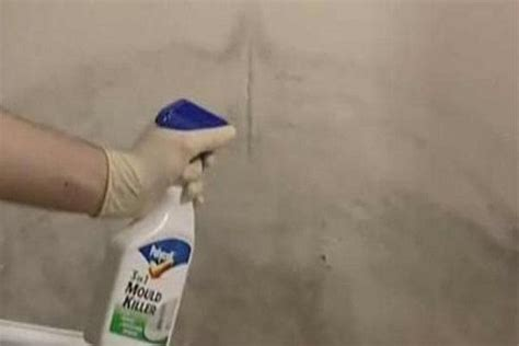 best grout cleaner for white grout how to repair how to clean mold walls mold spores