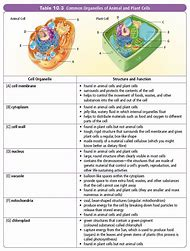 Best 25 ideas about cell organelles and their functions find what plant cell parts and their functions ccuart Gallery