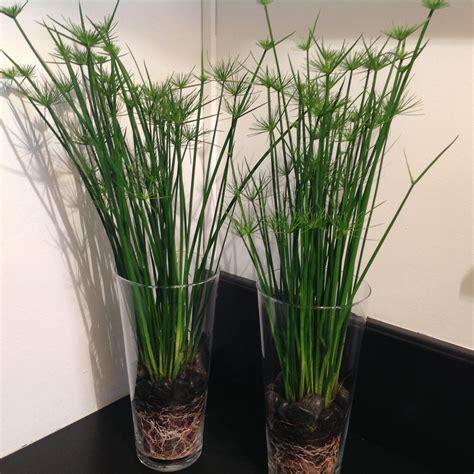 sous bureau original plantes en pot d 39 intérieur tentez l 39 originalité avec