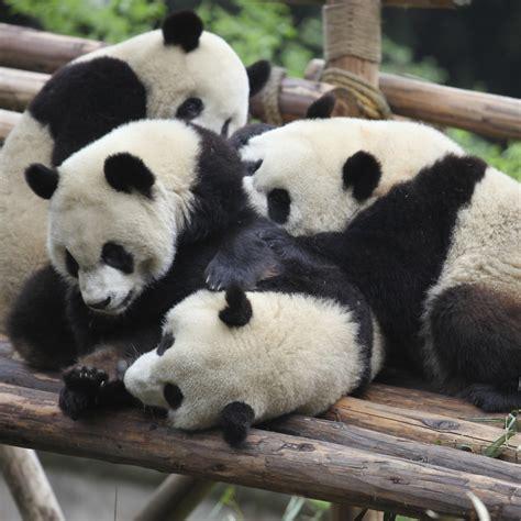 spots chengdu china dailuo flickr