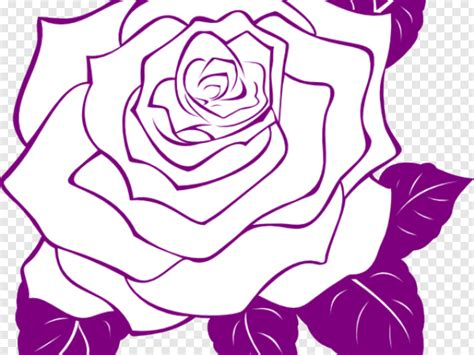 keren  bunga mawar hd gambar bunga hd
