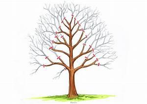 Hainbuche Baum Schneiden : hainbuche schneiden anleitungen mit illustrationen ~ Watch28wear.com Haus und Dekorationen