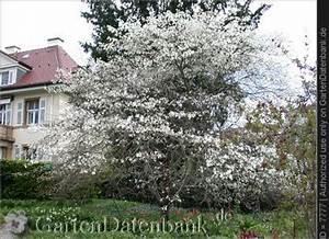 Baum Mit Weißen Blüten : hermannshof im fr hling bilder fotos bilder fotos ~ Michelbontemps.com Haus und Dekorationen
