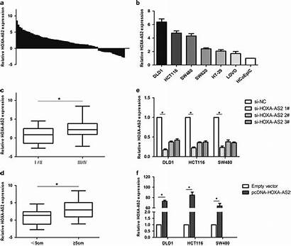 Expression Relative Cancer As2 Hoxa Tissues Colorectal