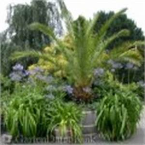Phoenix Canariensis Pflege : ph nixpalme phoenix canariensis schneiden pflege pflanzen ~ Lizthompson.info Haus und Dekorationen