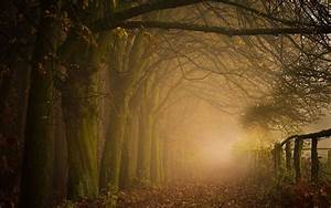 Path, Leaves, Forest, Mist, Nature, Trees, Landscape, Fence, Fall