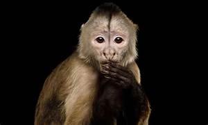 Monkey Sees      Monkey Knows    Newscenter