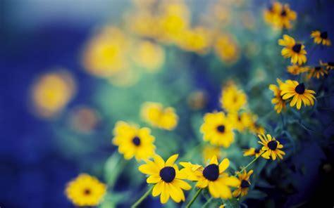 Best Flowers A3 Hd Desktop Wallpapers 4k Hd