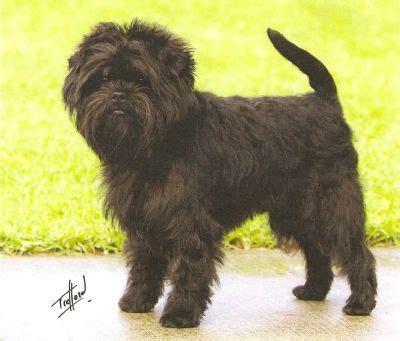 dog breed classification  pytorch mcai