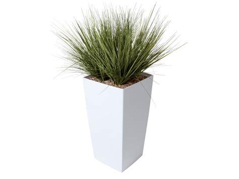 plantes de bureau plantes de bureaux végétal i bureau