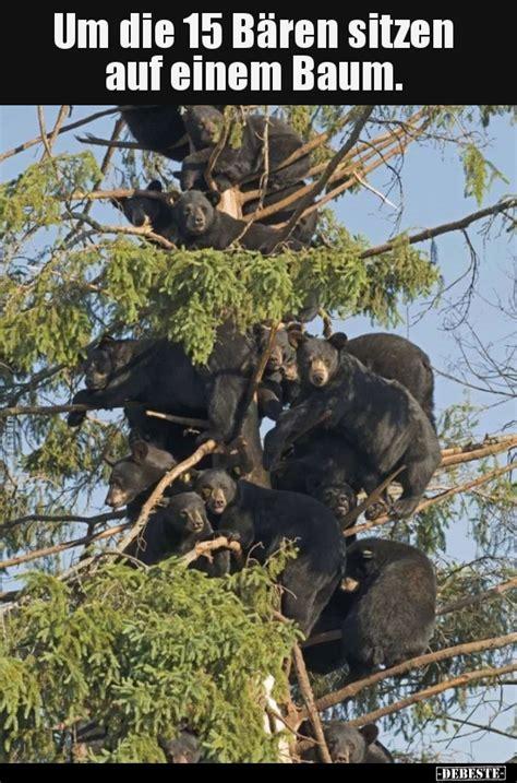 lustige bären bilder um die 15 b 228 ren sitzen auf einem baum lustige bilder spr 252 che witze echt lustig