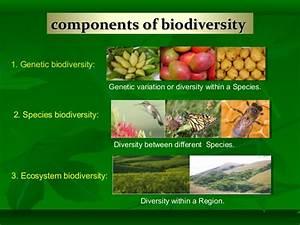 Biodiversity Status In Gujarat By Jitendra Kumar Singh