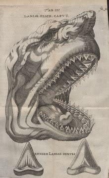 Shark Teeth Rows