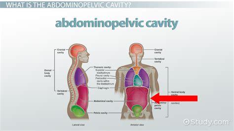 abdominopelvic cavity bony landmarks organs regions