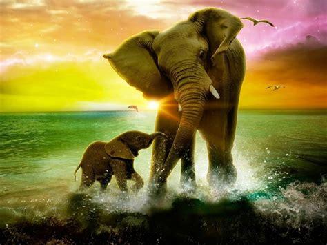 Free Animal Wallpaper Backgrounds - elephants images backgrounds hd wallpapers free