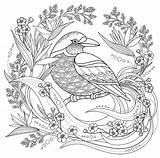 Coloring Bird Birds Floral Adult Animals Elements Nature sketch template