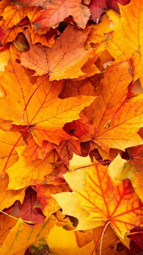 Aesthetic High Resolution Fall Backgrounds by Best Wallpapers For Iphone 6 With High Resolution Fall