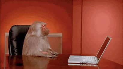 Baboon Meme Office Complex