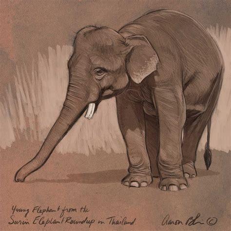 images  elephants illustrations realistic