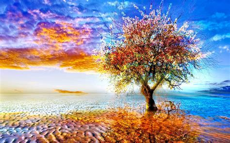 colorful tree bing images wallpaperexperts blogspot com loversiq