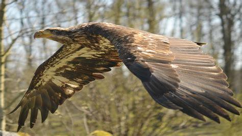bird, Animal, Beautiful, Wild, Wings, Exotic, Birds ...