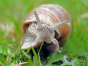 Snail Farming Guide  Techniques And Tips