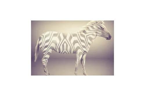 download zebra designer pro
