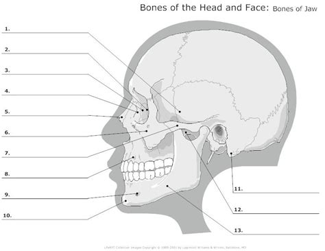 advanced skull labeling free worksheets search