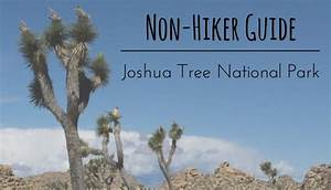 Non-hiker Guide To Joshua Tree National Park