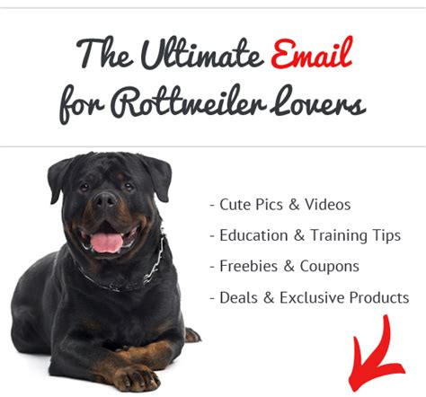 Do Mini Pinschers Shed A Lot by Rottweiler News Stories Pictures Products