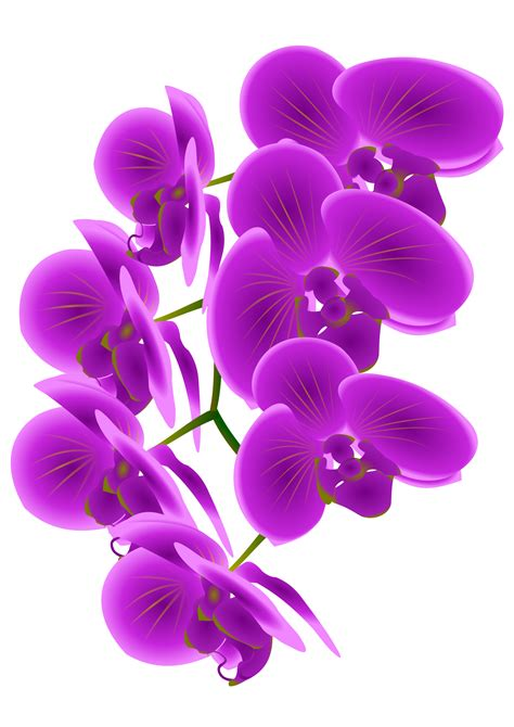 orchid svg  orchid svg