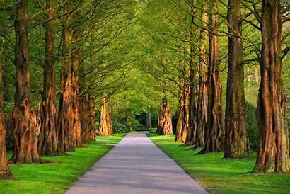 Tree Lined Road Path 4k Park Background