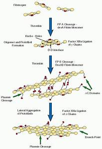 Fibrinogen Structure and Function | Oncohema Key