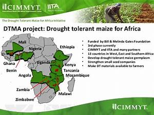 Remote sensing based drought tolerant maize targeting in SSA