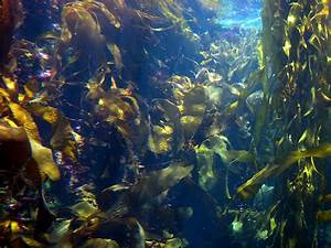 Sea Vegetablesrobins Key
